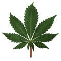 Localizado laboratório de refino de drogas em Itaberaí