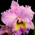 VII Exposição de orquídeas