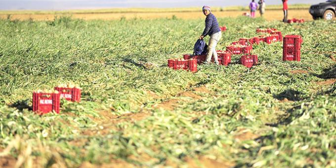 Sun Foods prop�e parceria para horticultores de Inhumas e regi�o