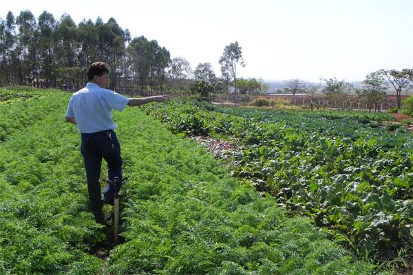 Horta Comunitária produz com excelente qualidade