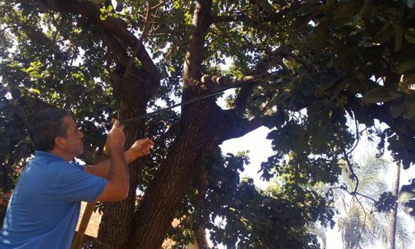 Onça é resgatada em cima de árvore em uma residência de Inhumas