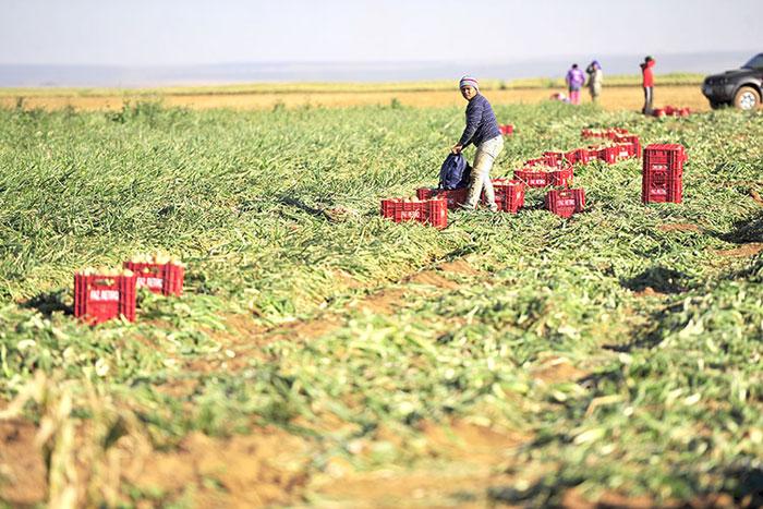 Sun Foods propõe parceria para horticultores de Inhumas e região